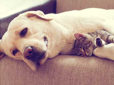 The Difference Between Cats and Dogs: It's in the Breeding - Tips on Life  and Love