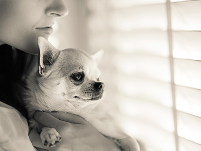 Chihuahua_owner_400
