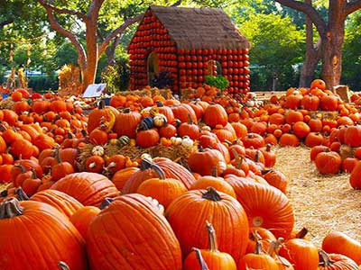 pumpkin-patch_400